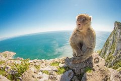 gibraltar-day-trip-from