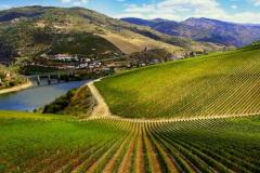 vinos_de_ribera_del_duero